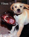 Yikes !! - dogs photo