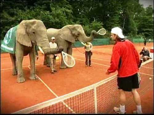 elephants tennis