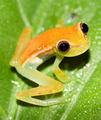 newborn christmas frog