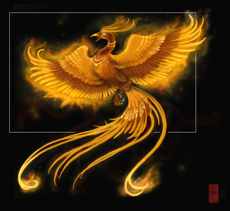 phoenix-anime-animal-11714453-800-732.jp