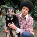 <3 (: Michael Jackson :) <3 - michael-jackson photo