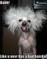 Bad hair day :)