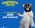 Fantastic Mr. Fox - Wallpaper - Ash - fantastic-mr-fox wallpaper