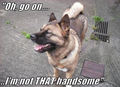 Handsome.... - dogs photo