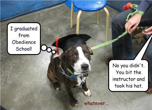 I graduated !