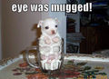 I was mugged !! - dogs photo