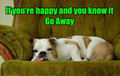 If your happy ! - dogs photo