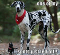 One of my spots fell off !! - dogs photo