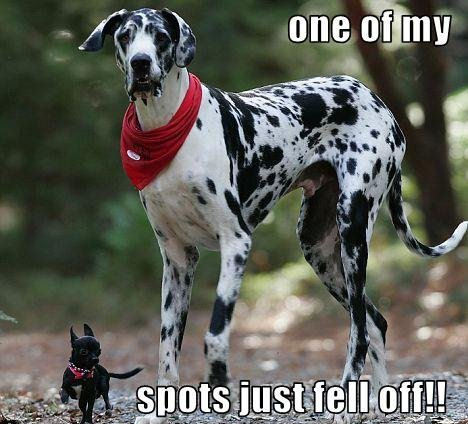 One of my spots fell off !!