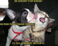 Puppy tongue torture ! - dogs photo