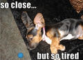 So Close....... - dogs photo