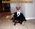 Sometimes I feel so low ! - dogs photo