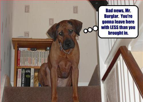 Bad news, Mr. Burglar !