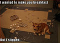 Breakfast ! - dogs photo