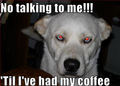 Coffee........ - dogs photo