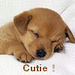 Cutie ! - dogs icon