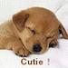 Cutie ! - dogs icon