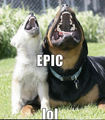 Epic.......lol - dogs photo