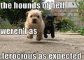 Hounds of Hell.........lol ! - dogs photo