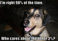 I'm Right.......... - dogs photo