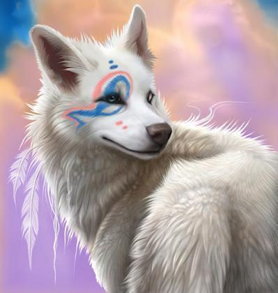 Indian Arctic lobo