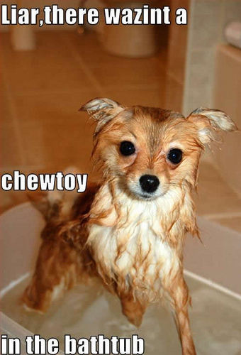 Liar,there wazint a chewtoy in the bathtub