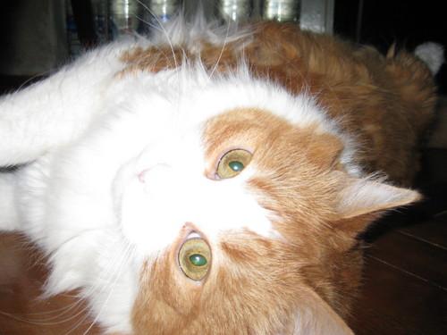 My fluffy friend<3