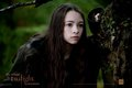 New Bree Tanner Still...Stalking in the woods - twilight-series photo