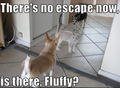 No escape ? - dogs photo