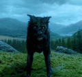 Padfoot