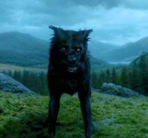 Padfoot - sirius-black Photo