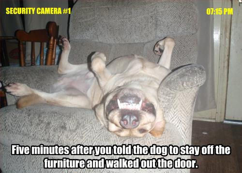 Stay off the furniture !