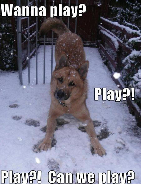 Wanna play? Play?! Play?! Can we play? - Dogs Photo ...