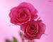 We love pink