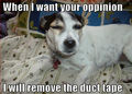 When I want your opinion !! - dogs photo