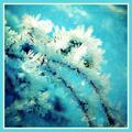 Winter_feelin - turquoise-color fan art