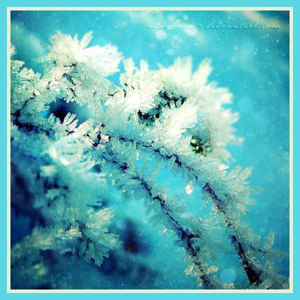 Winter_feelin