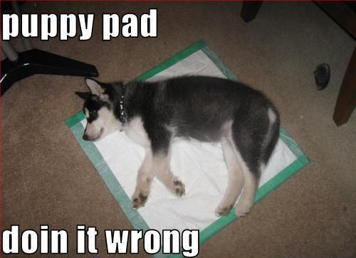 강아지 pad doin it wrong !