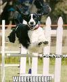 weeeeeeeee ! - dogs photo
