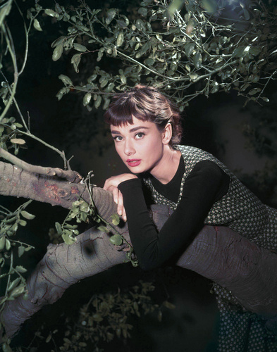 Sabrina (1954) wallpaper entitled Audrey Hepburn