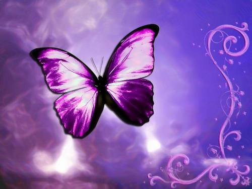 Beautiful Butterflies <3 - yorkshire_rose Wallpaper