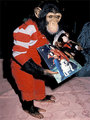 Bubbles showing us MJ - michael-jackson photo