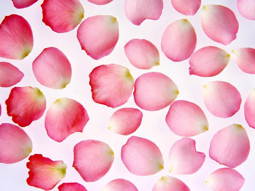 Flower Petals wallpaper x