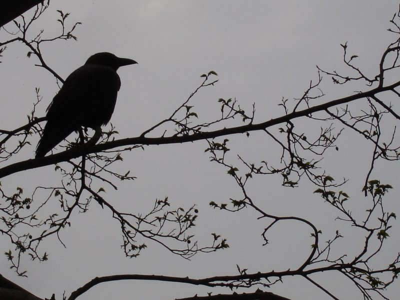 despair and gloominess in edgar allan poes the raven