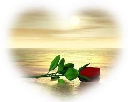 Beautiful Rose :)