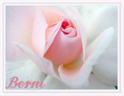 Berni xx