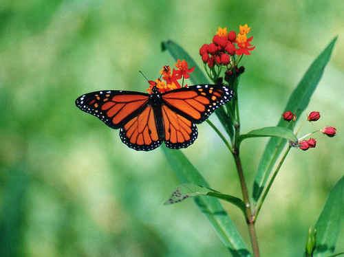 Pretty con bướm, bướm