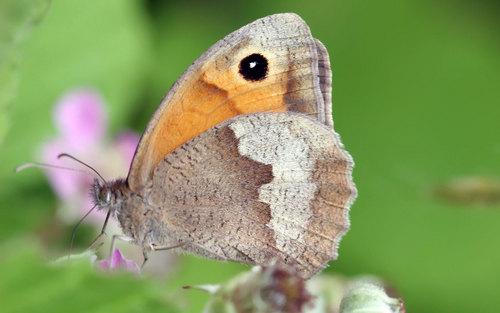 Pretty papillon