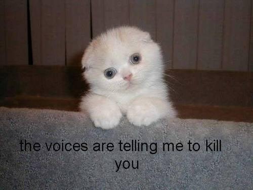 dont kill me!!!!