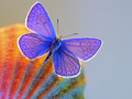 Butterflies - butterflies wallpaper